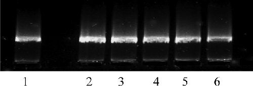 исследование генотоксичности в опытах in vitro химических веществ